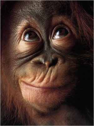 monkey.face